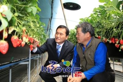 딸기고설재배농가현장방문