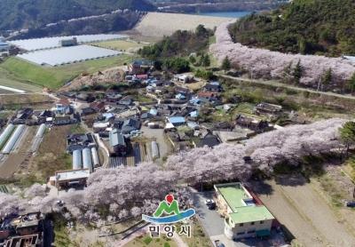 삼랑진벚꽃길