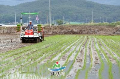 부북면 아라리쌀 재배단지 모심기
